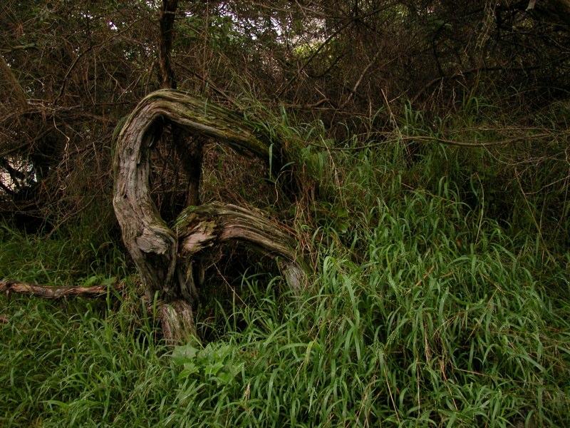 bending-tree